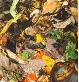 Food waste is made up of mostly green materials.
